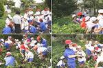 imohori1.jpg